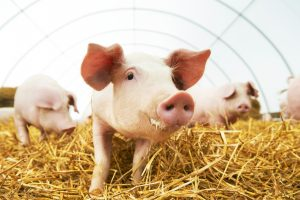 The Devastating Impacts of Factory Farming @ Riverdale-Yonkers Society for Ethical Culture | New York | United States